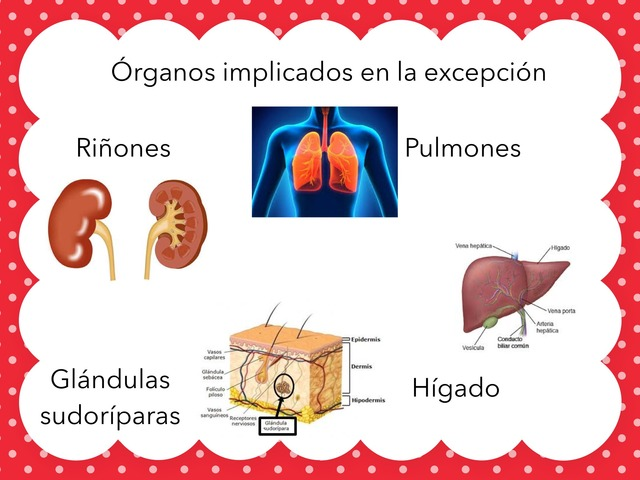 Aparato Excretor by Oscar Suarez Hurtado