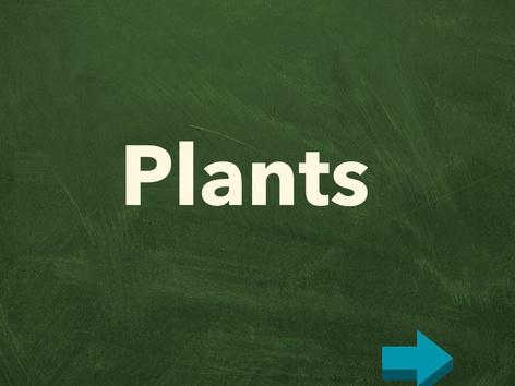 Plants by Lauren Edmonds