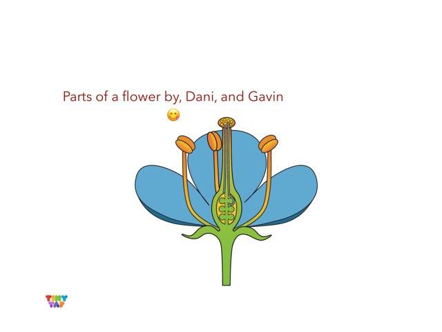 Dan & Gavin's Flower by Ashley Shaw