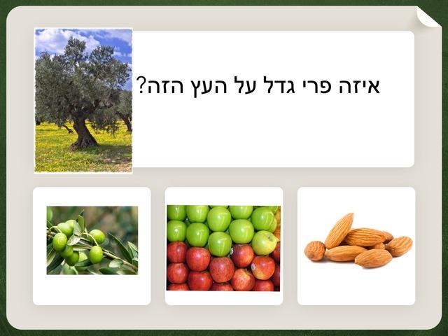 עץ זיתים by ניבין אלבאש