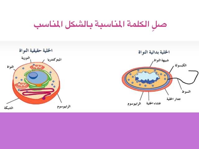 الفطريات by Shaikha AlAzmi