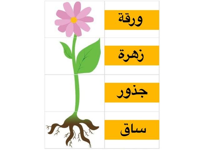 اكتشف الخطأ أجزاء النبات by Fatma Al-Ameer