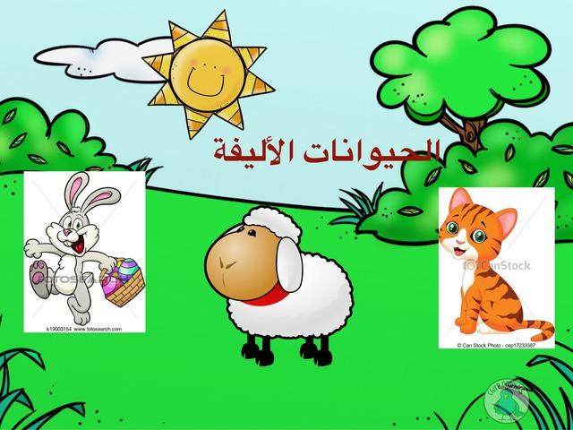 الحيوانات الاليفه by khadra alkrenawe