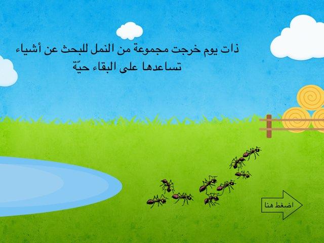 النمل by afnan fa