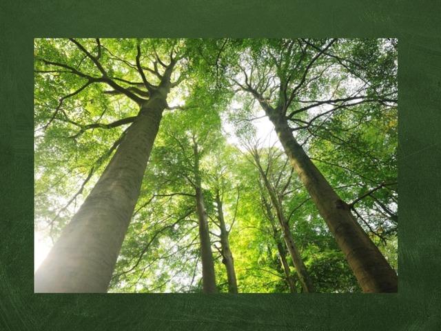 Bomen  by Kristel Wildenbeest