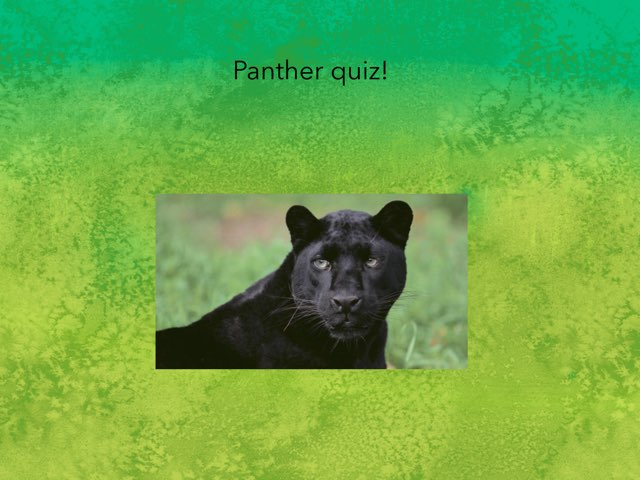 Panther Quiz by Caitlin Lao