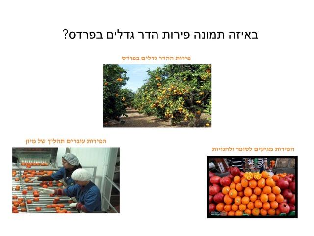 אינה פירות הדר by אינה אייזנברג-קורנקוב