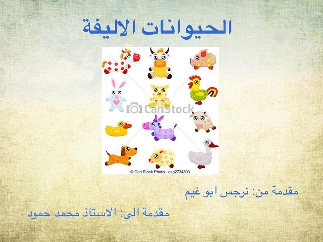 الحيوانات الاليفه by narges abuganem