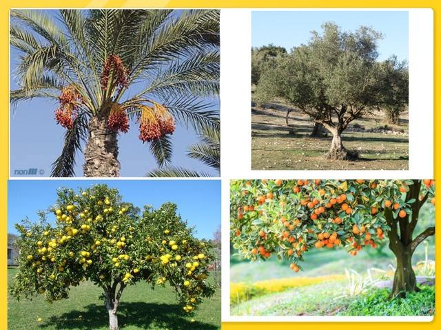 עצים by ניבין אלבאש