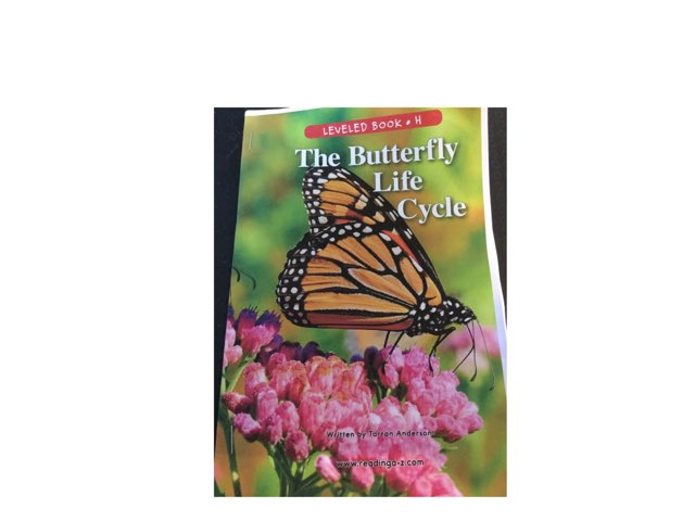 Butterfly Vocabulary Activity by margaret rafle