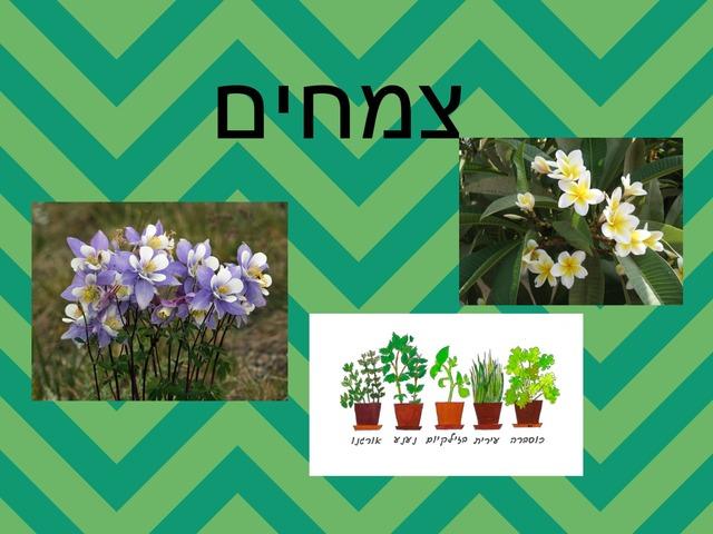 תכונות הצמחים by אנה רגינסקי