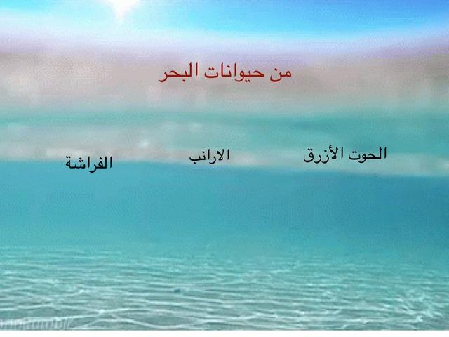 العلوم by Rana Albeshi