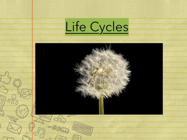Life Cycles by Lyndsey Serrano