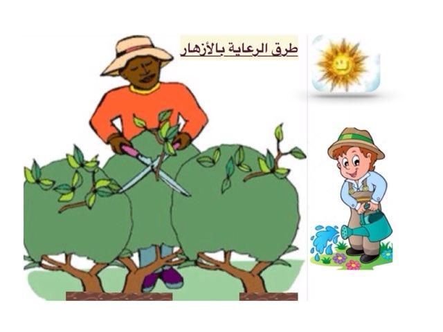 طرق الرعاية بالأزهار by ام عبدالرحمن فاروق