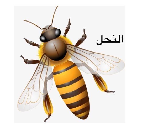 النحل by Doaa Halabe