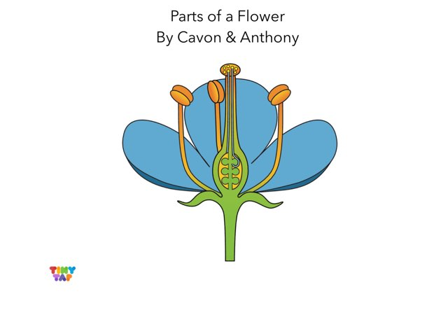 Parts Of A Flower by Ashley Shaw
