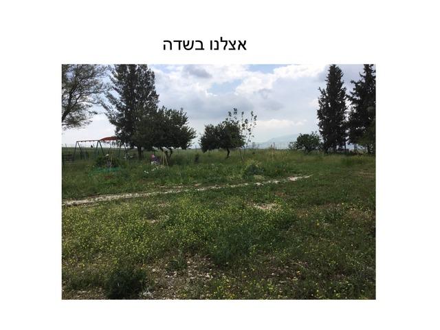 אצלינו בשדה by Yael Halevi Abel