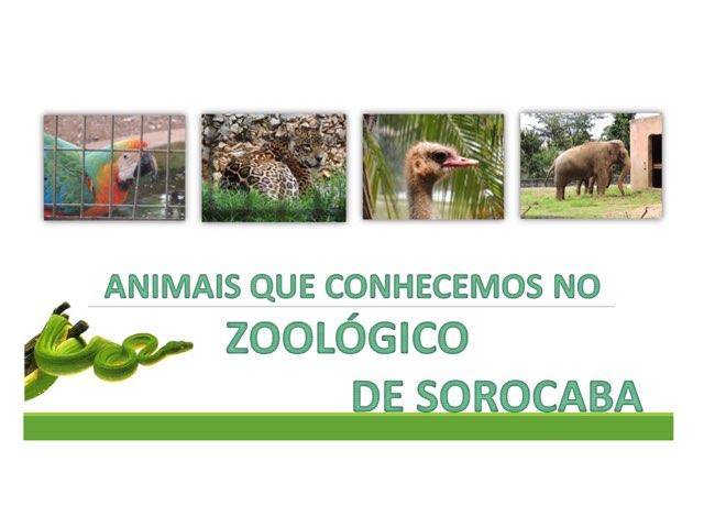 Animais do Zoológico  by Fernanda Lourenco