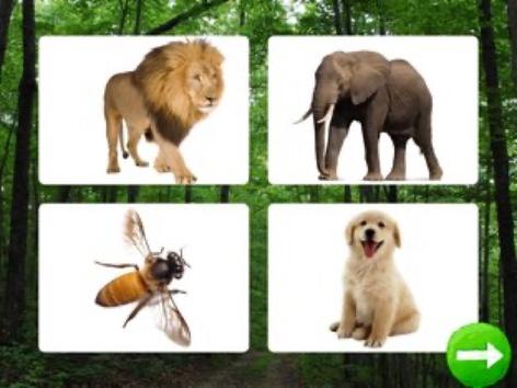 Animal Sounds  by Yam Goddard
