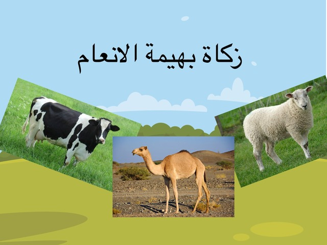 بهائم الانعام by noof Ahmed