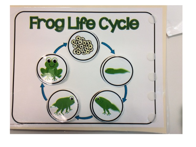 Frog Cycle by Catrina Froehler