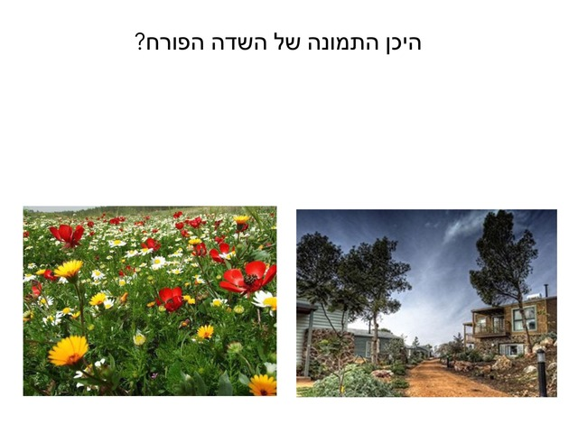 אביב by ורד כהן