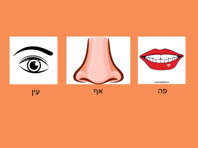 זיהוי חלקי פנים by תמר נסים