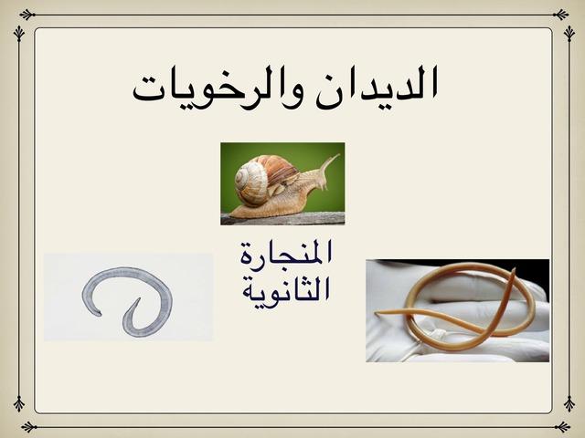 الديدان والرخويات by احمد كريري