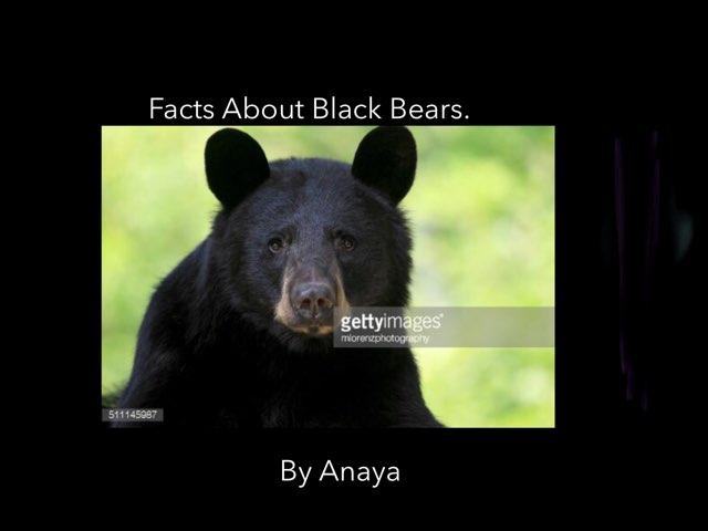 Black bears By Anaya by Hulstrom 1st Grade
