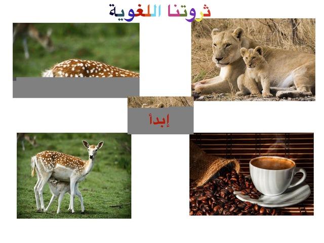 ثروتنا اللغوية (אוצר מילים) by אביבית לל