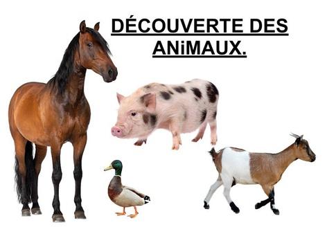 Découverte Des Animaux 3. by Valerie Escalpade