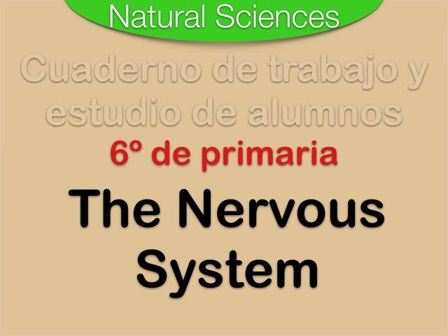 The Nervous System by Elysia Edu