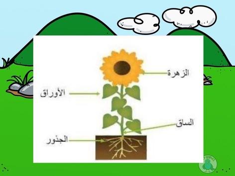 اجزاء النبتة by christeen mansour