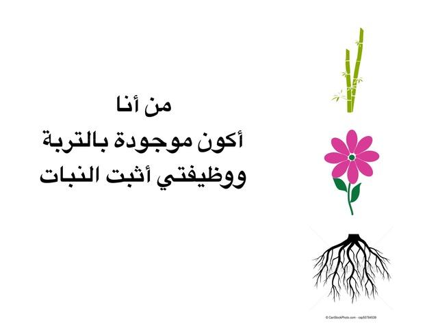 من أنا نبات  by hanan alhashemi