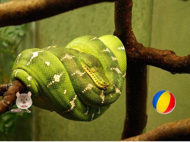 הנחש הזללן by Ricki Caduri