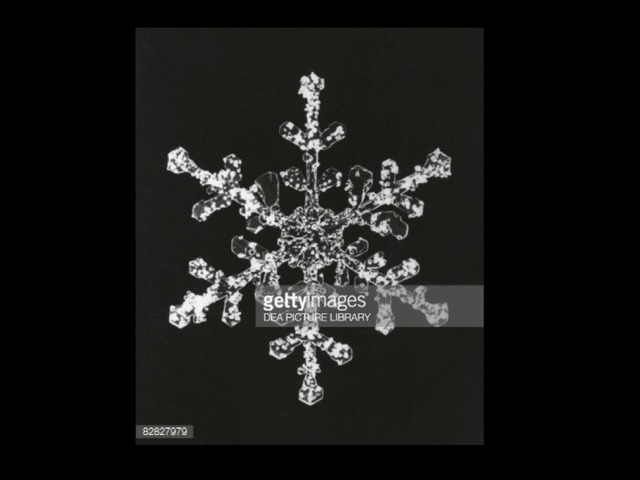 Snowflakes by Sheila Manning