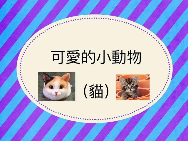 可愛的小動物(貓) by Bell Chung