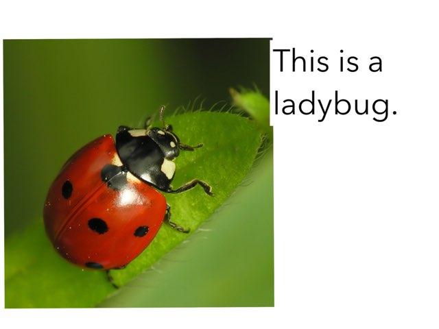 The Ladybug by Ma wert