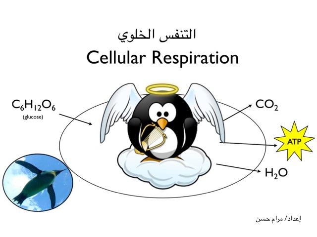 التنفس الخلوي by Maram Hassan