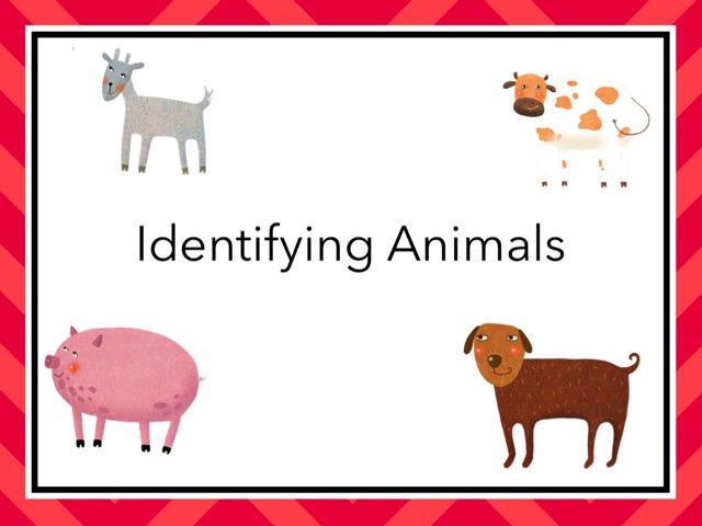 Identifying Animals by Mrs. Kellock