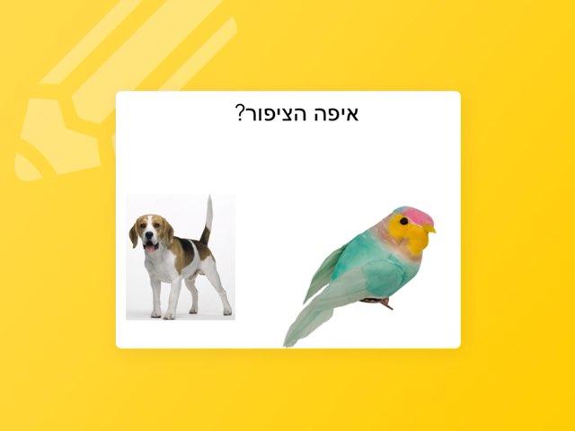 ציפורים by Rotem Cohen