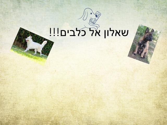 ליבי כלבים by בית ספר קישון