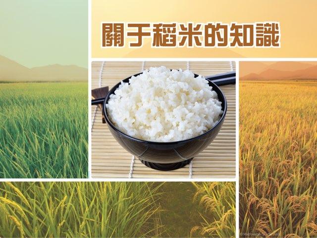 關于稻米的知識 by Kids Dailies