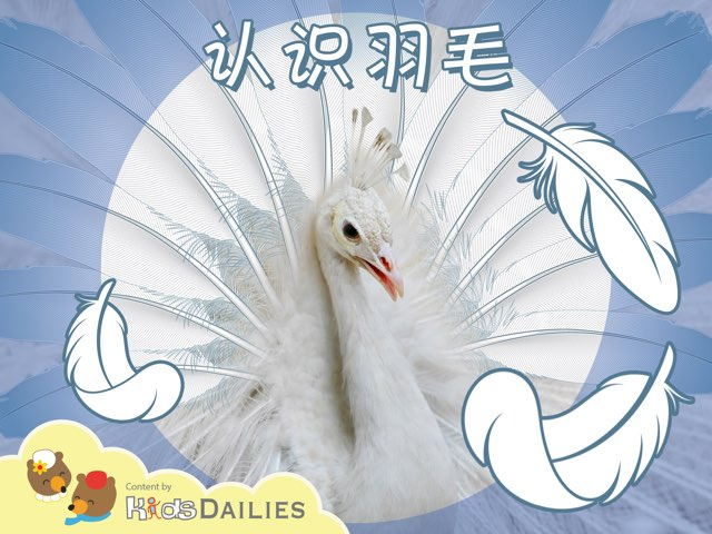 一起来学习一下关于羽毛的知识吧! by Kids Dailies