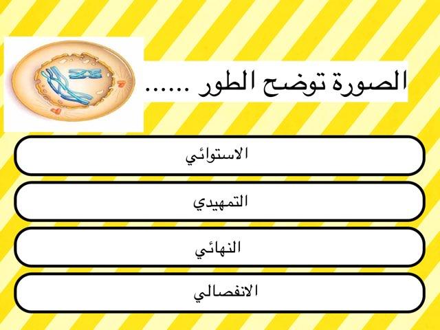 انقسام ميوزي اول by mariam yousef