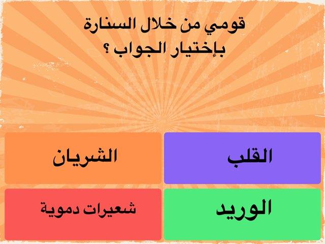 كيف يعمل الجهاز الدوري  ٢ مسابقات  by hanan alhashemi