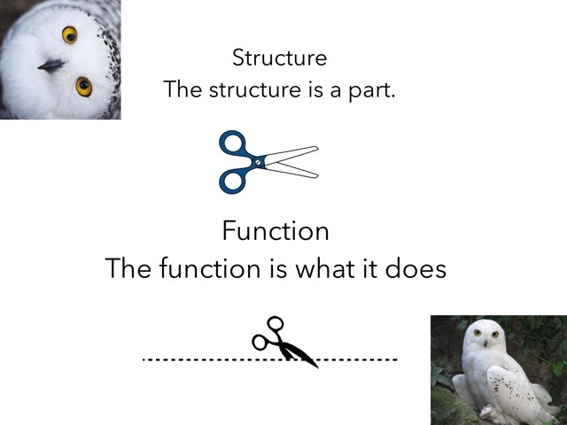 Snowy Owl Structure And Function  by Sarah Bosch