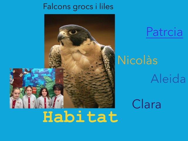 Habitat by Racons Segon