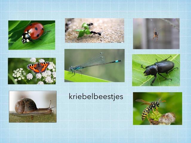 Woordenschat Kriebelbeestjes  by Willie-Janne Kramer