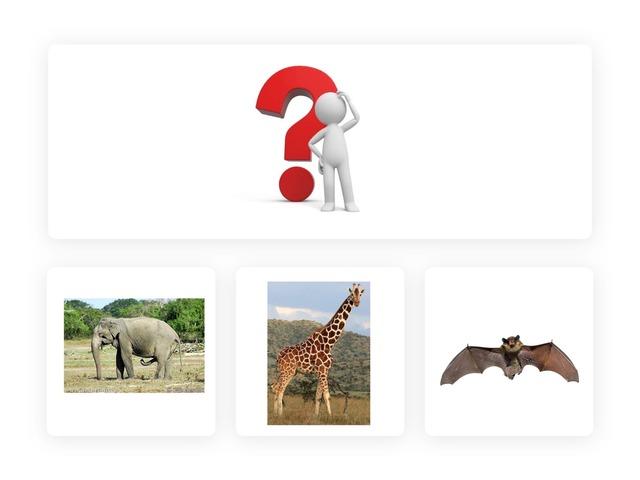 משחק שאלות חיות  by אורטל לביא